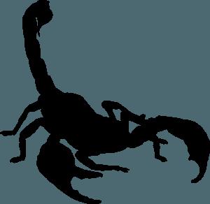 astrološko znamenje - škorpjion
