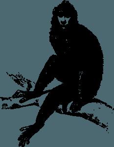 Kitajski horoskop - Opica
