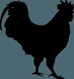 kitajski horoskop - petelin