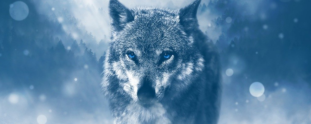 duhovna zival volk