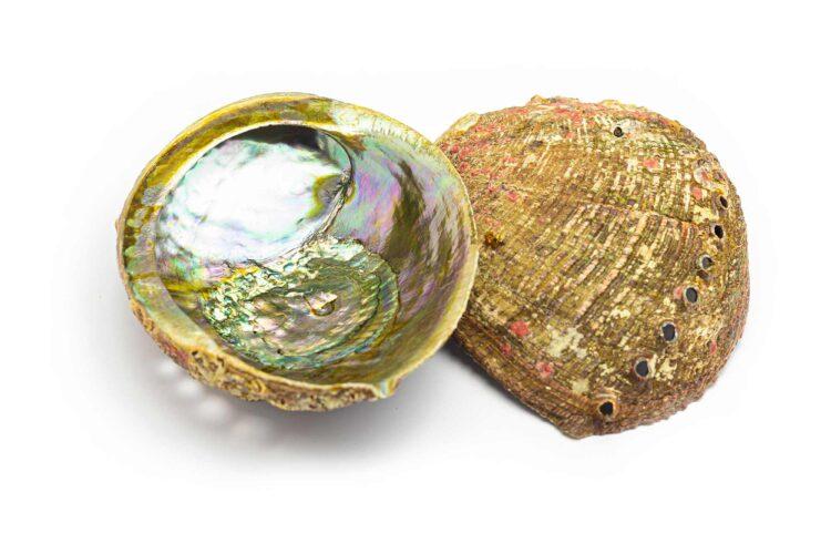 abalone-portal8