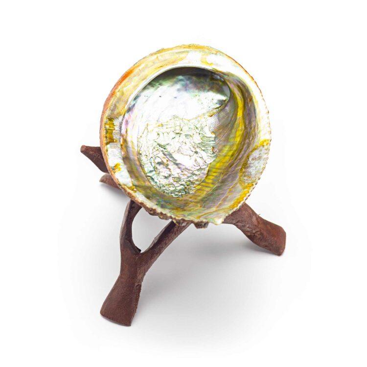 abalone-skoljka-portal8